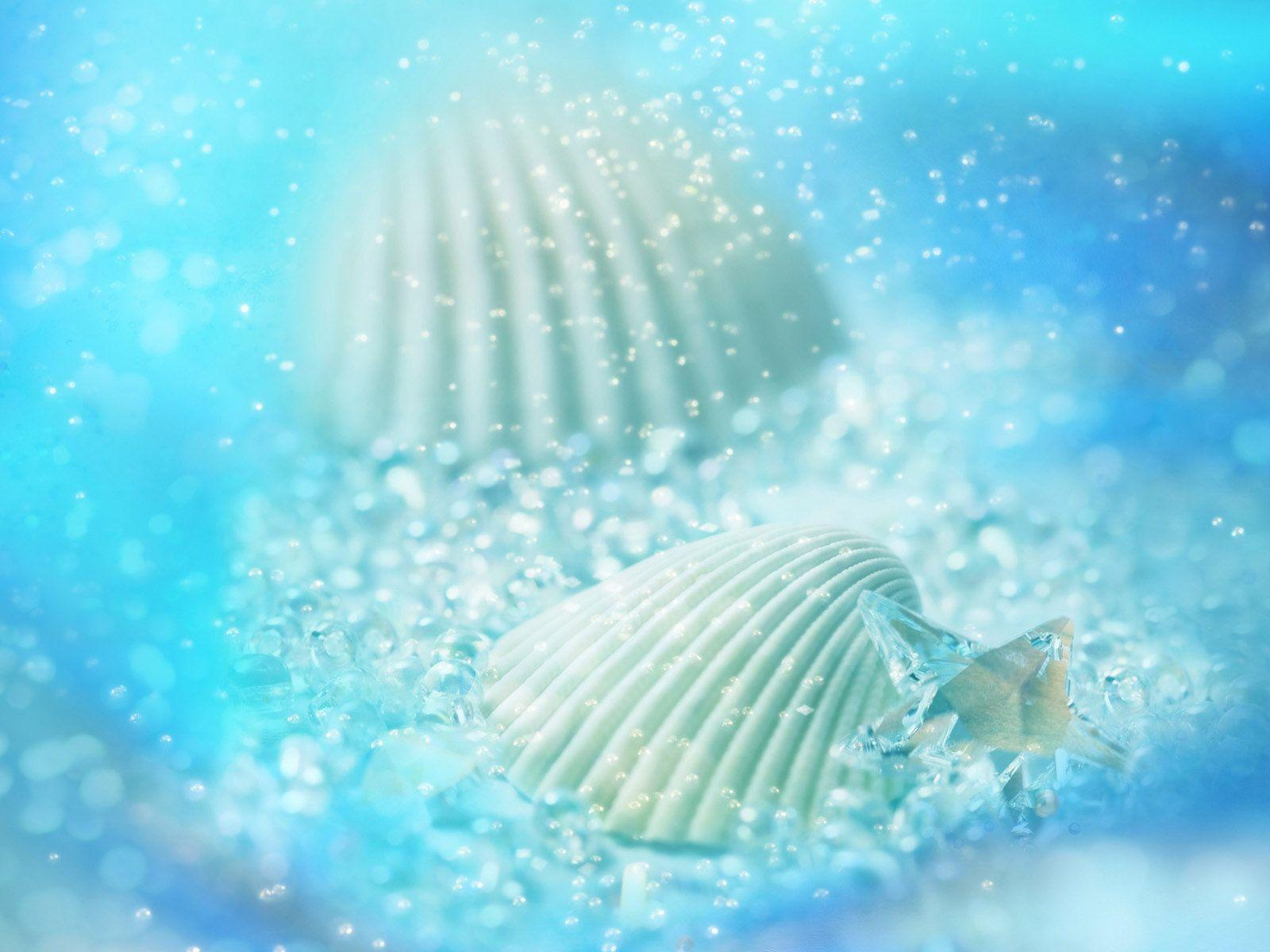 壁紙 貝殻 ダウンロード 写真
