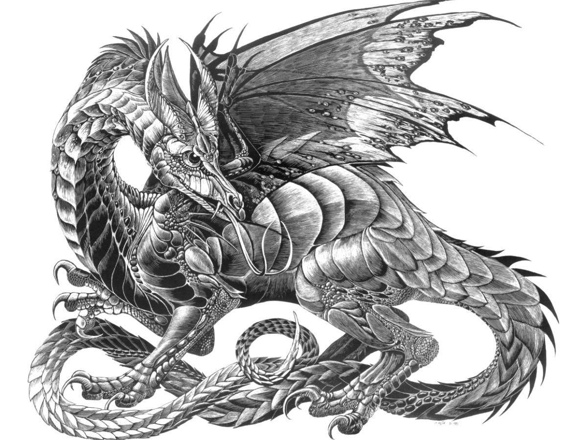 bilder von drache fantasy gezeichnet weißer hintergrund