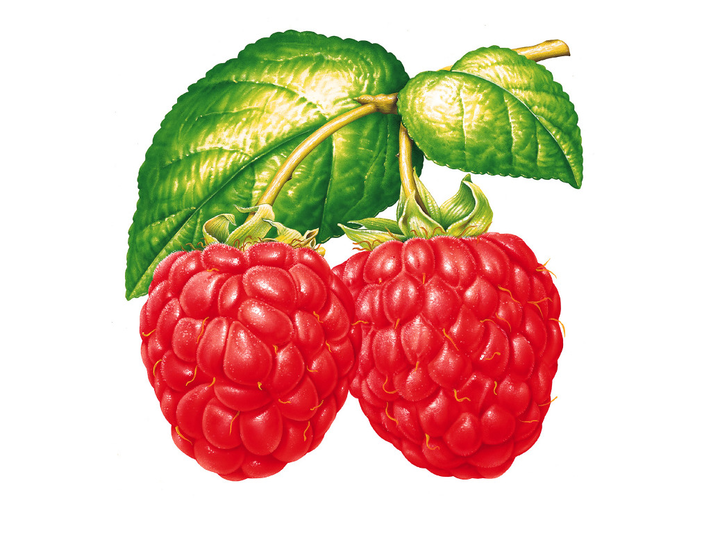 raspberry and white wallpaper - photo #33