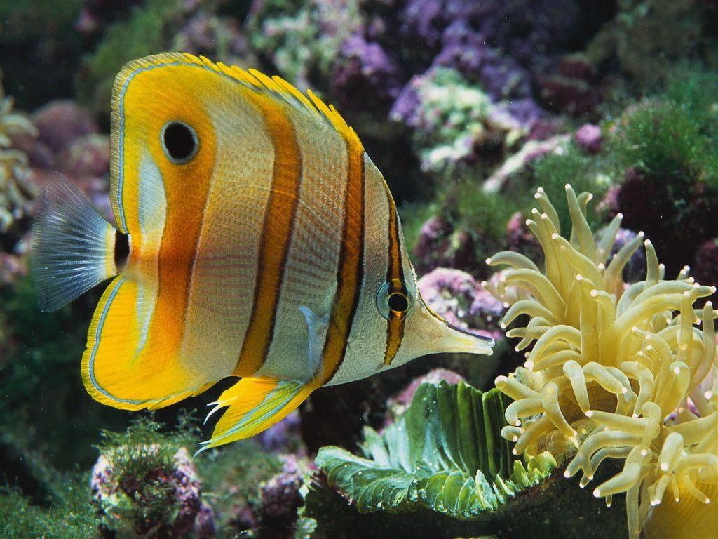 Beles Tueuses Fishs 1
