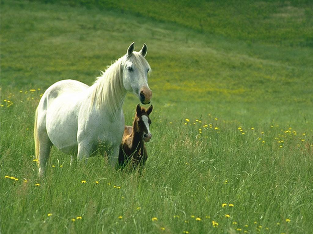 Papeis De Parede Cavalo Animalia Baixar Imagens