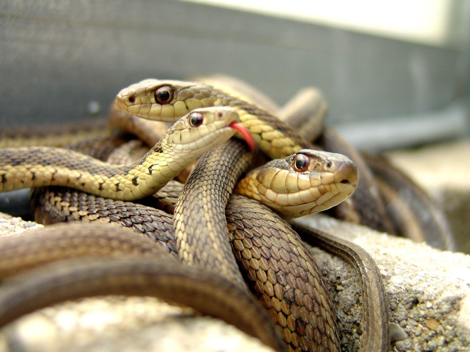 Resultado de imagen para Serpentes