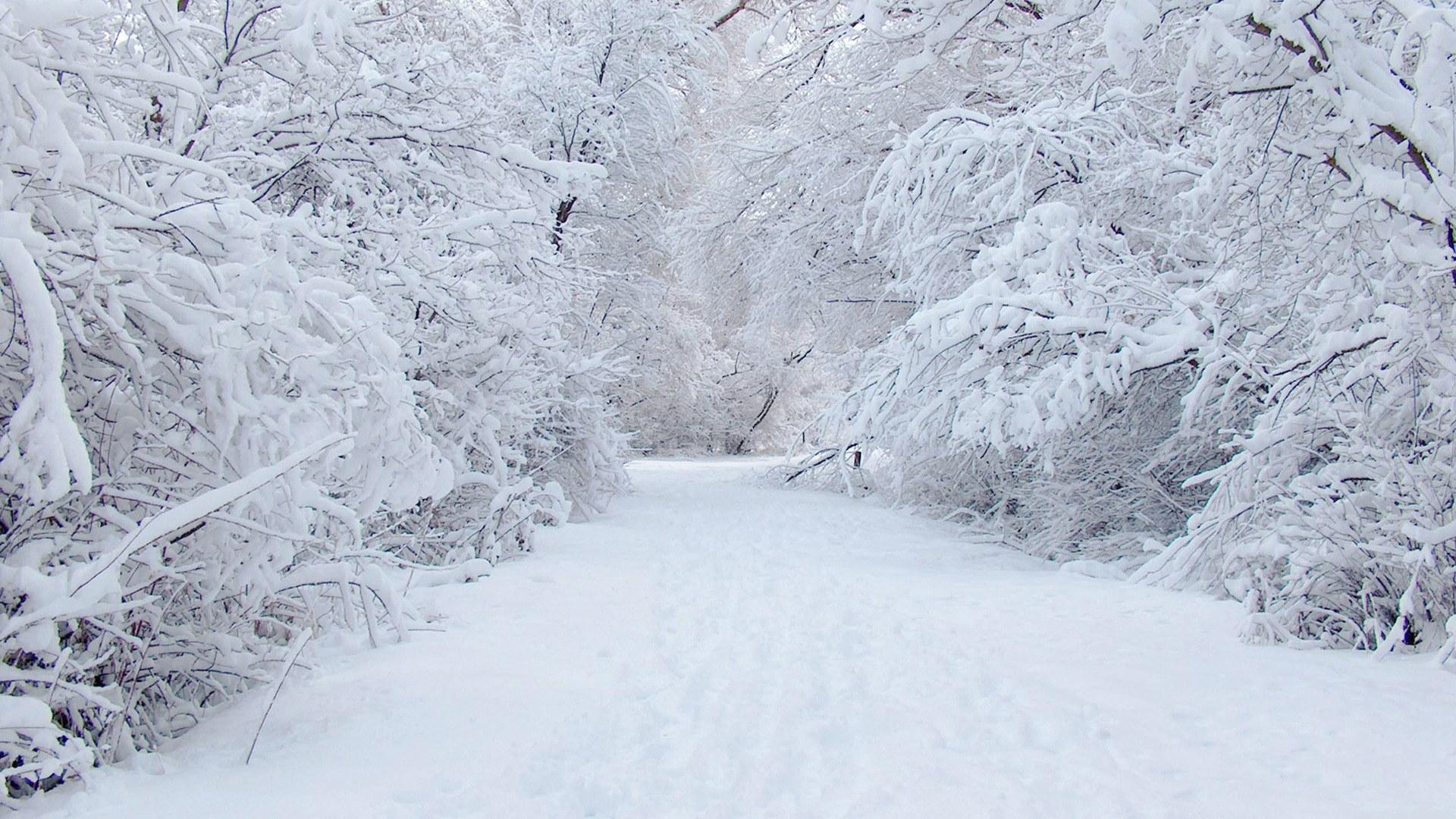 Image result for seasons winter