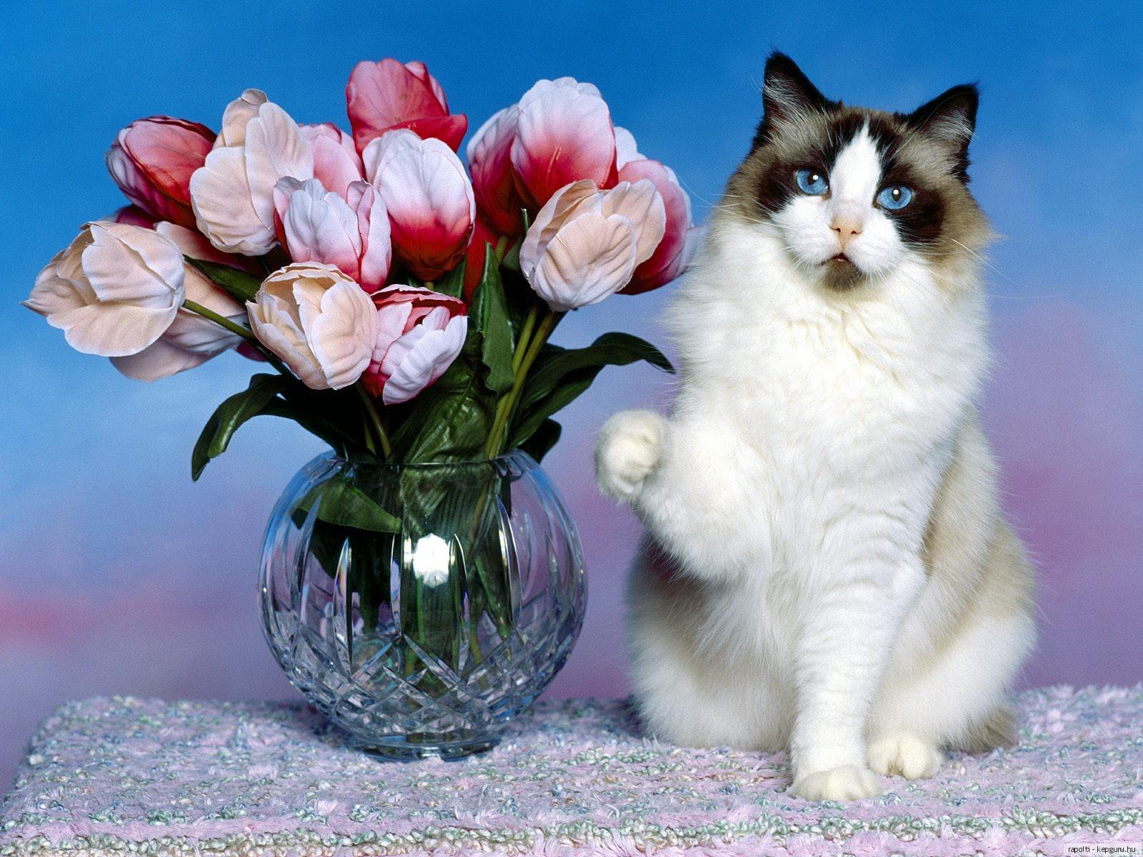 Открытки животные и цветы 18