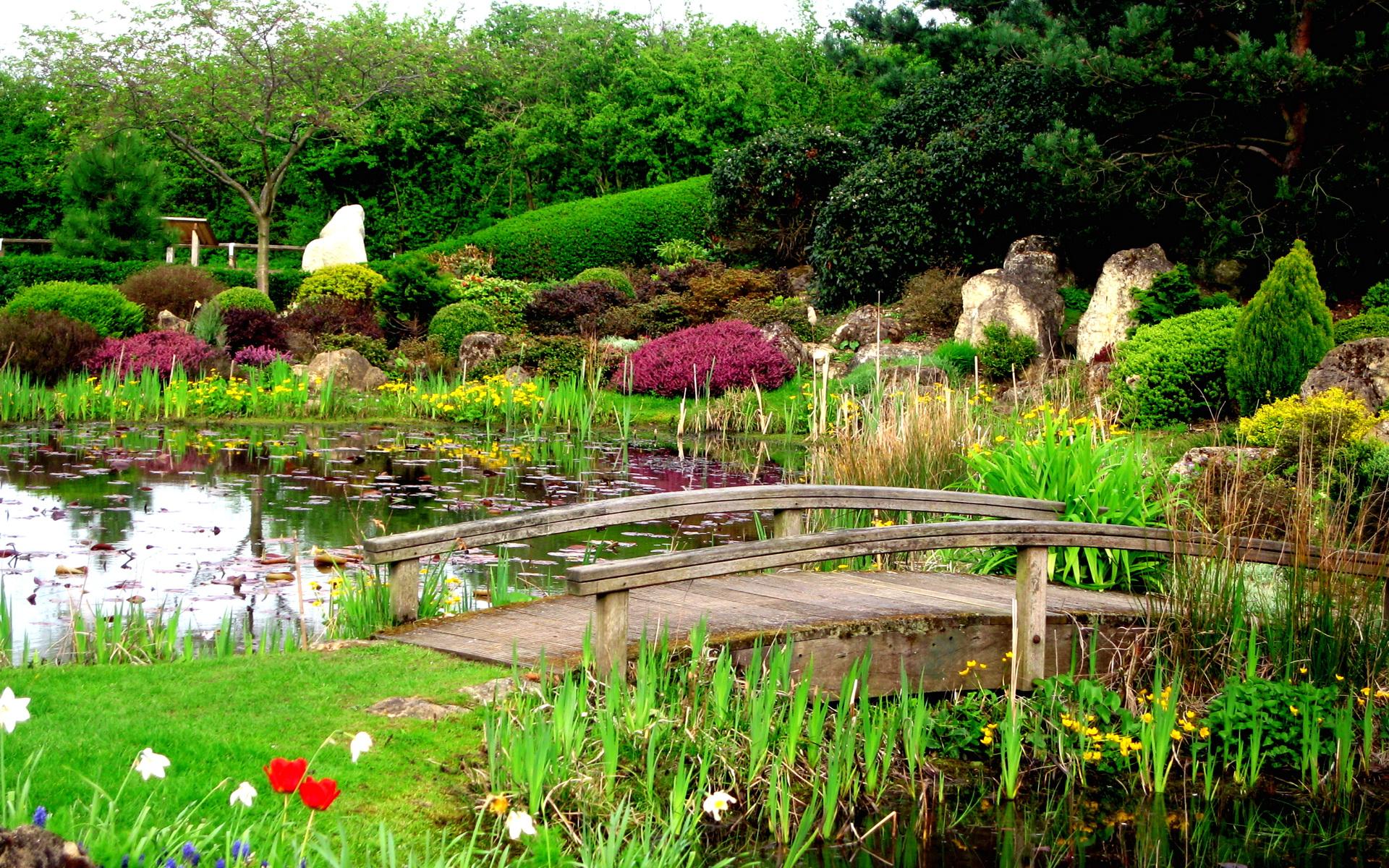 Фото пруды с цветами