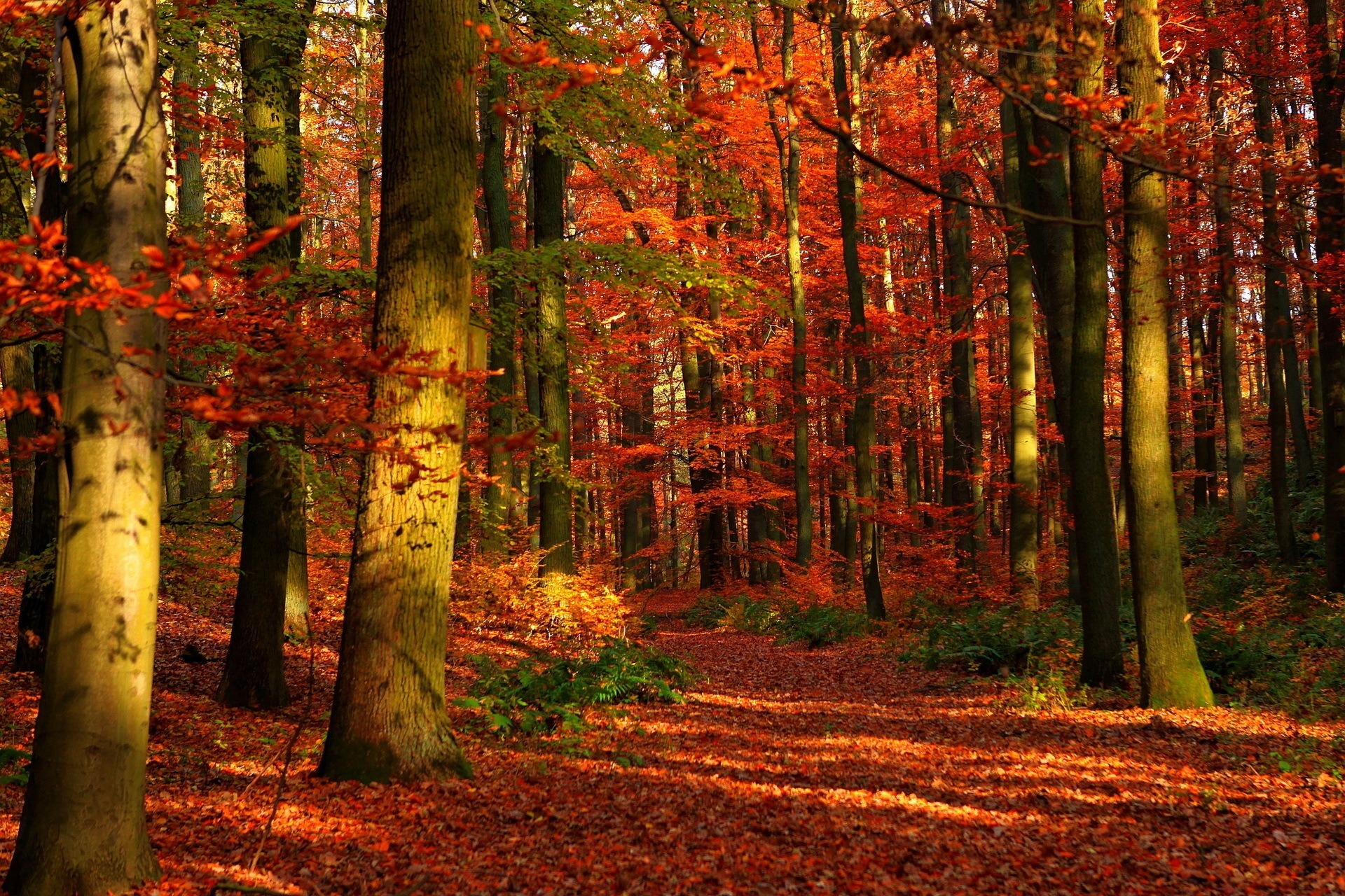 images nature autumn forests seasons 1920x1280