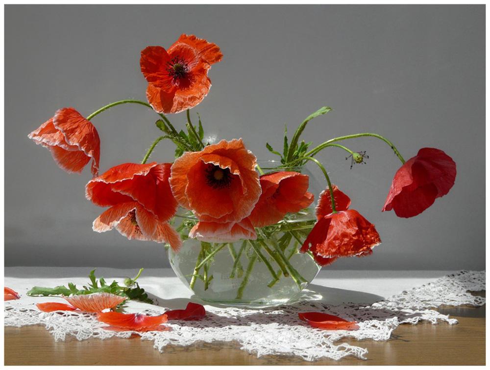 фото цветы маки