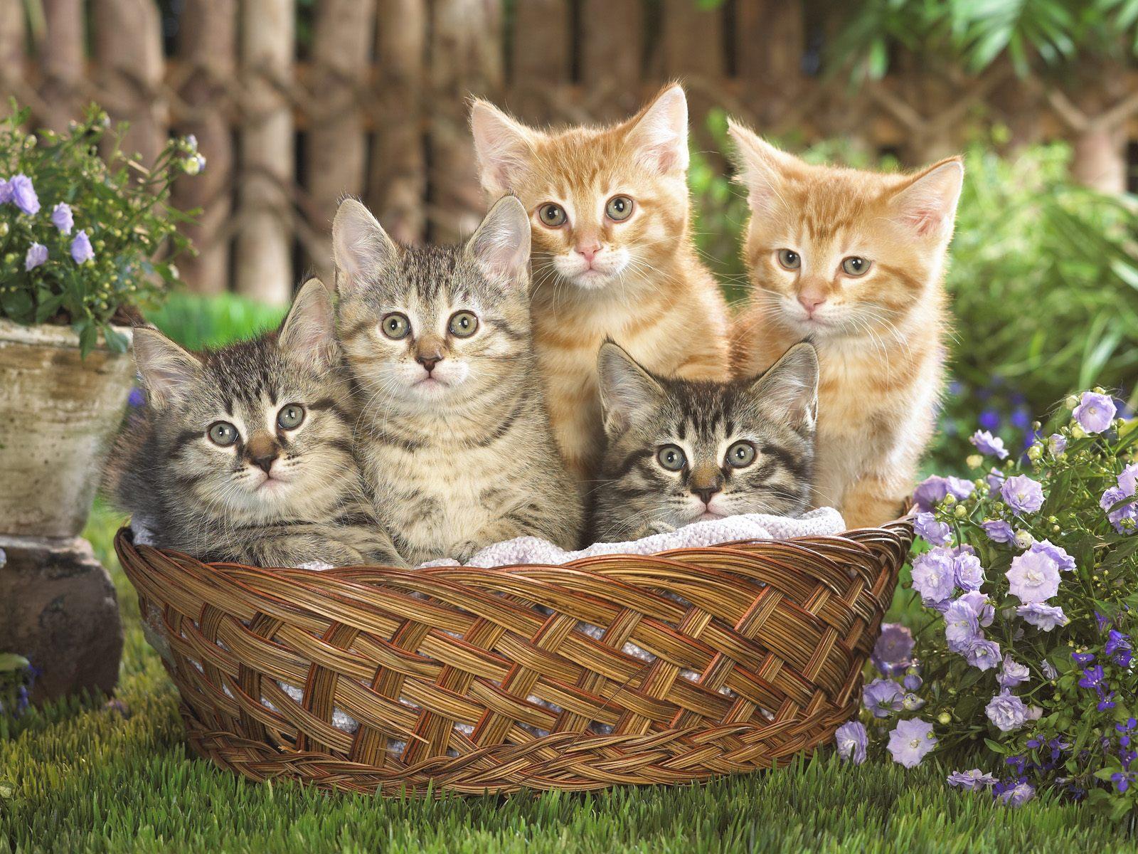 Как цвет кошки влияет на человека и его судьбу