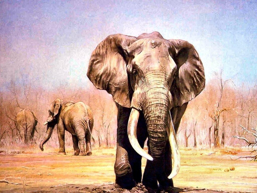 Picture Elephants Animals