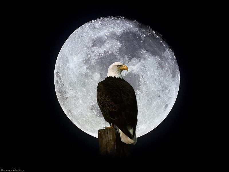 Wallpaper birds eagles animals voltagebd Image collections