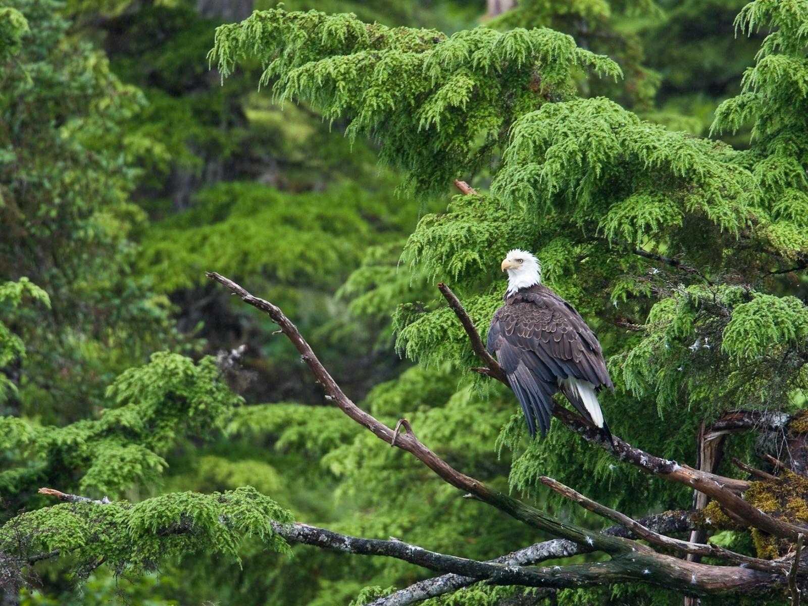 Image bird Eagles animal eagle Birds Animals