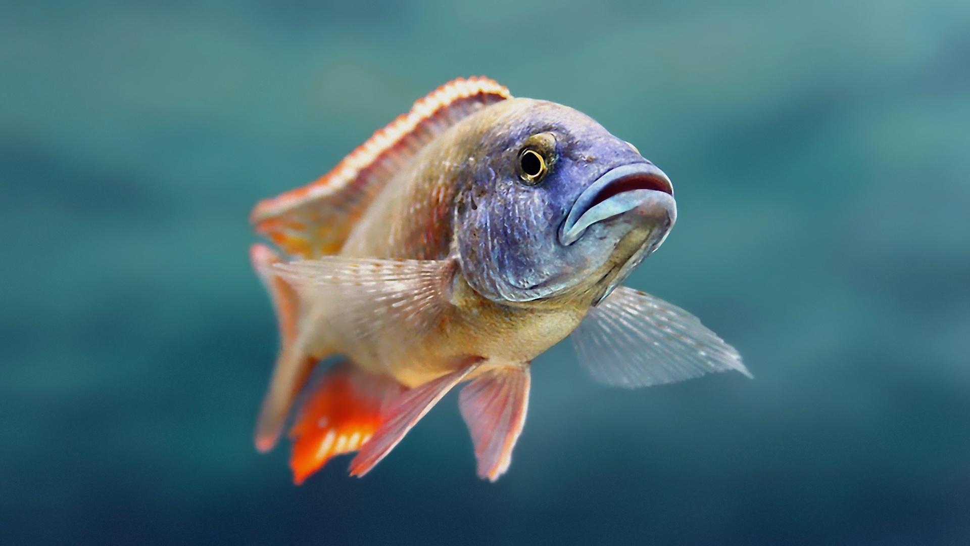 Fonds d 39 ecran poisson animaux t l charger photo for Fond ecran animaux hd