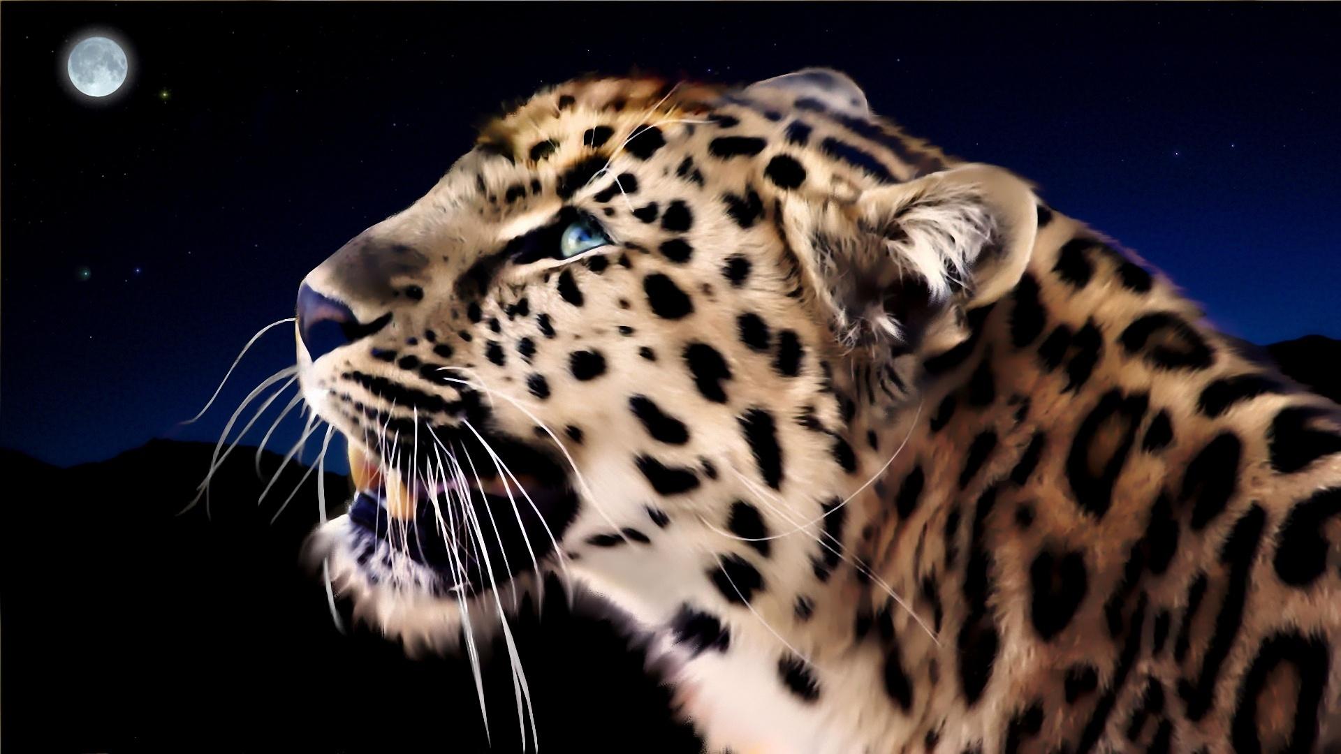 Animales Felino Leopardos Fondo De Pantalla Fondos De: Group Of De Escritorio Leopardos