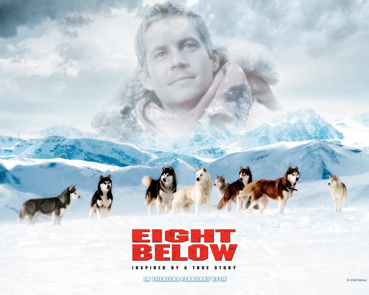 Image Paul Walker Eight Below Movies