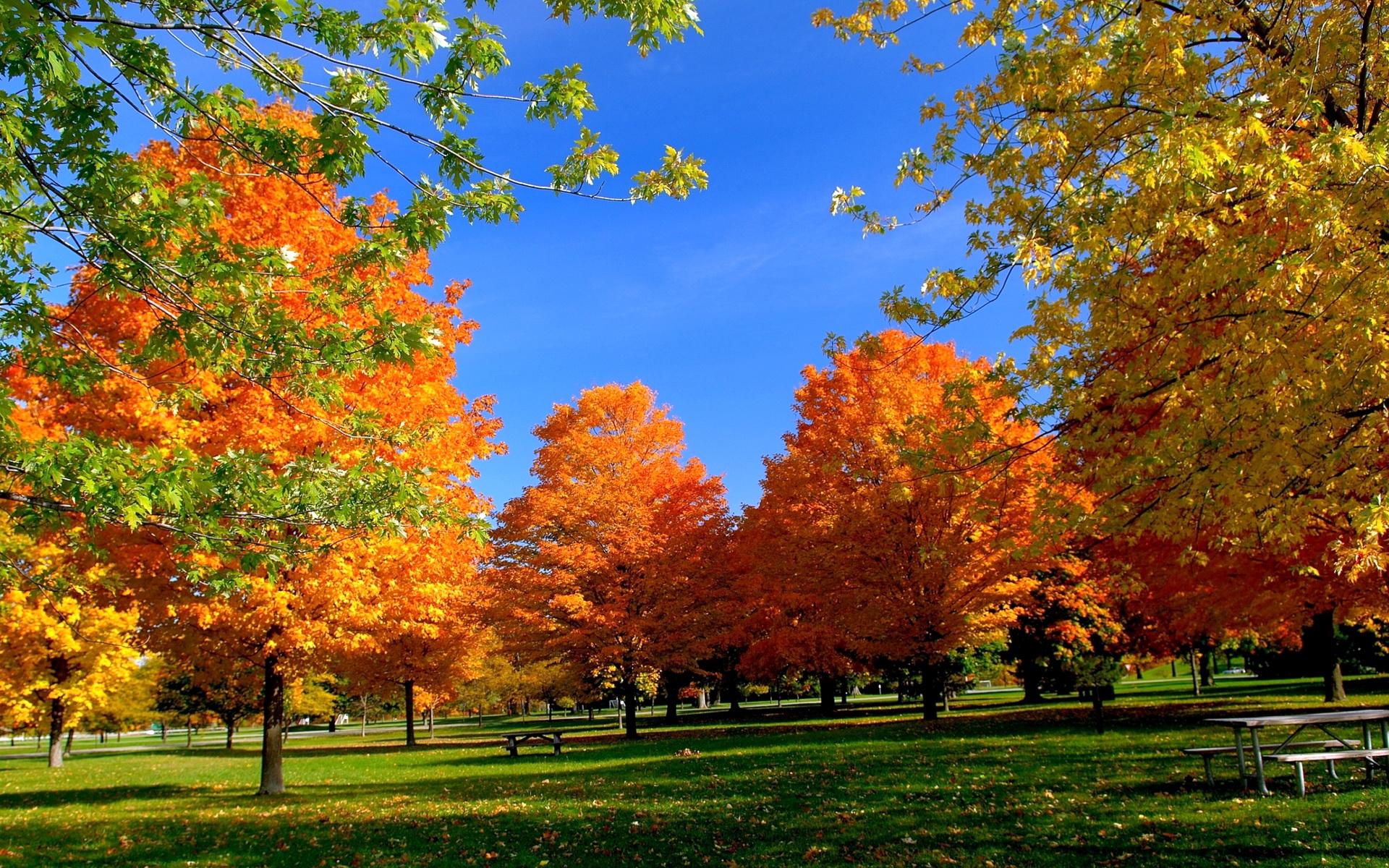 Картинки по запросу времена года осень