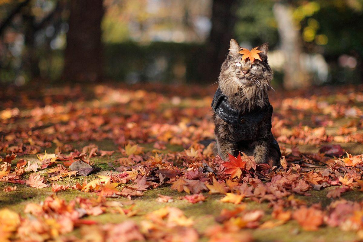 Скачать картинки осень листья