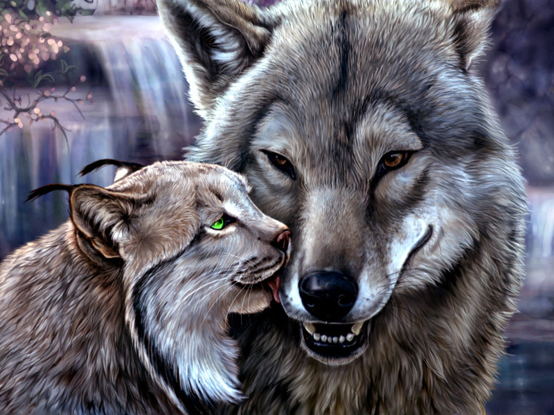 Wallpapers Lynx Wolves Big Cats Animals