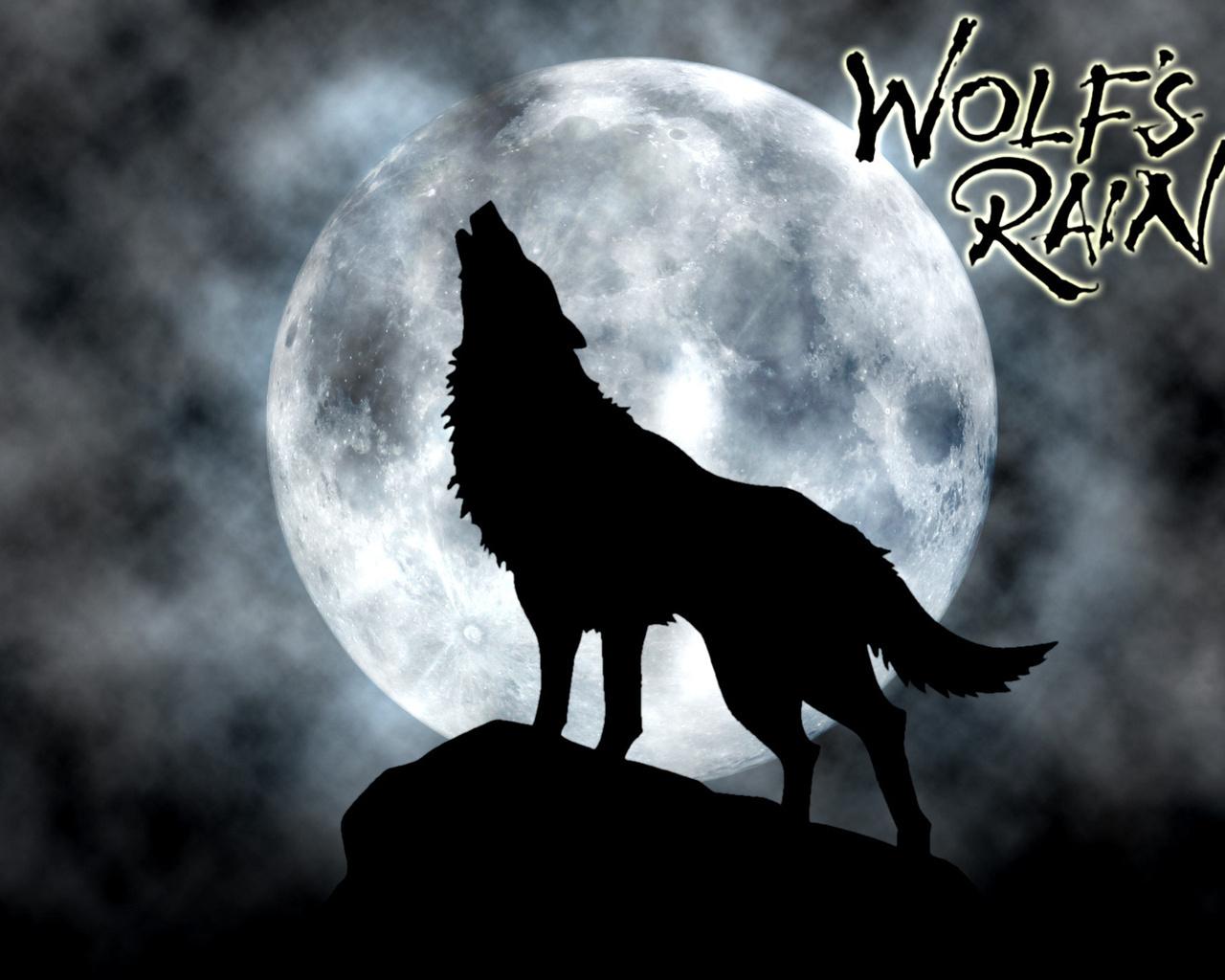 papeis de parede wolf s rain lobo lua silhueta anime baixar imagens