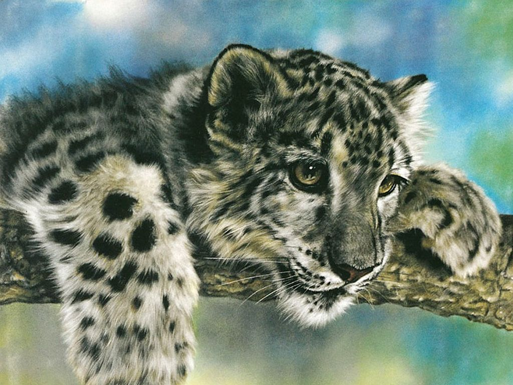 Photos Big Cats Snow Leopards Cubs Animals Painting Art