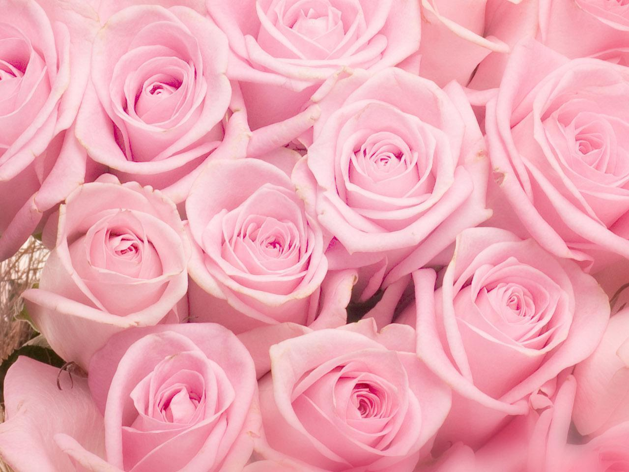Image Roses Flowers