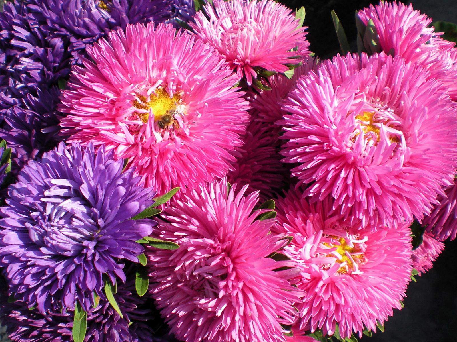 Фото цветов с анимацией