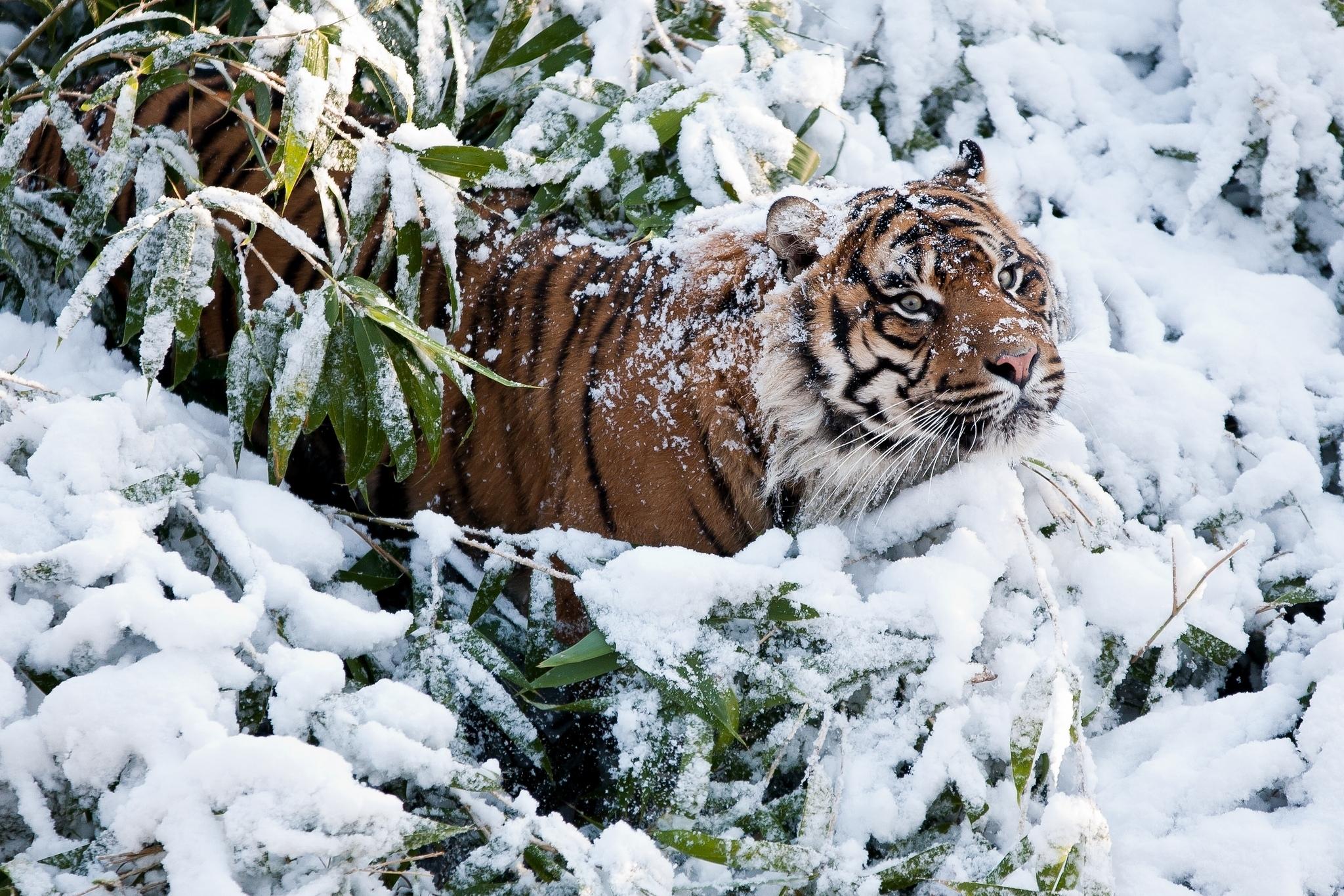 Обои На Стол Животные Зимой