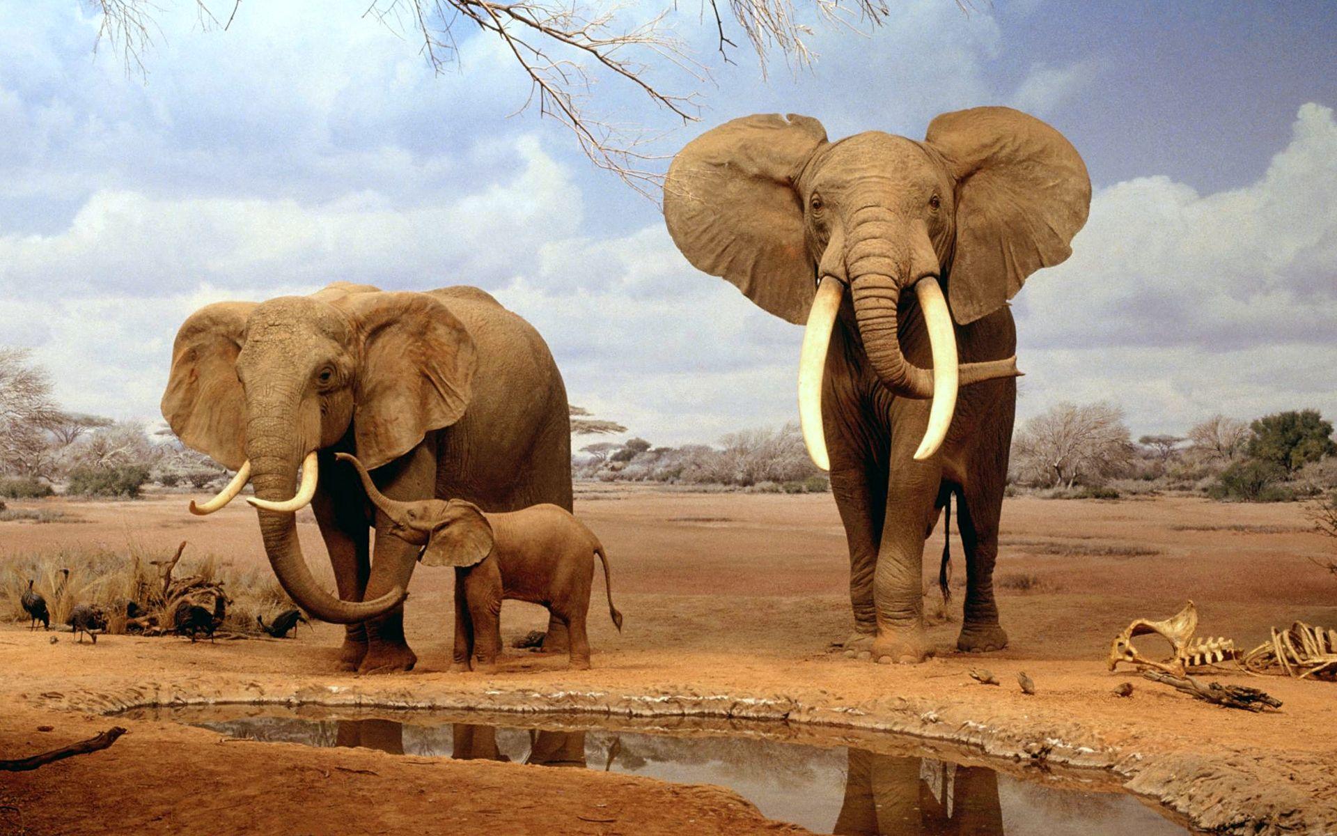 Desert Animals  DesertUSA