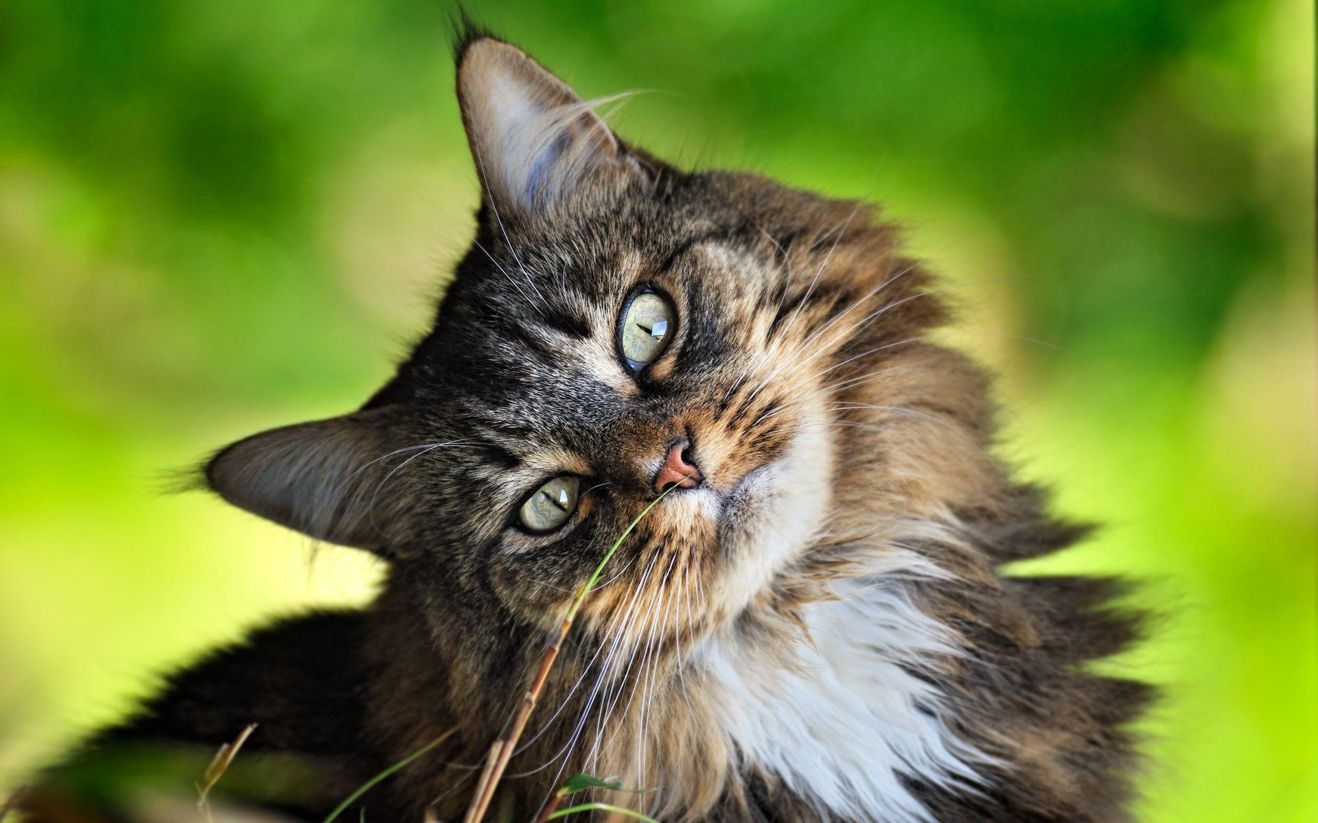 gatos stoixima