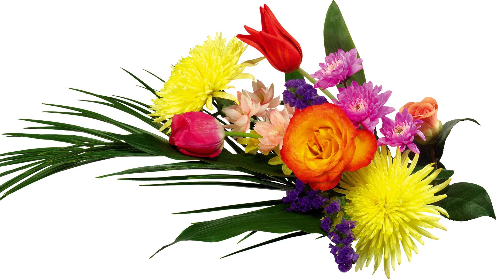 300+ mejores imágenes de FLORES | flores, flores bonitas ...