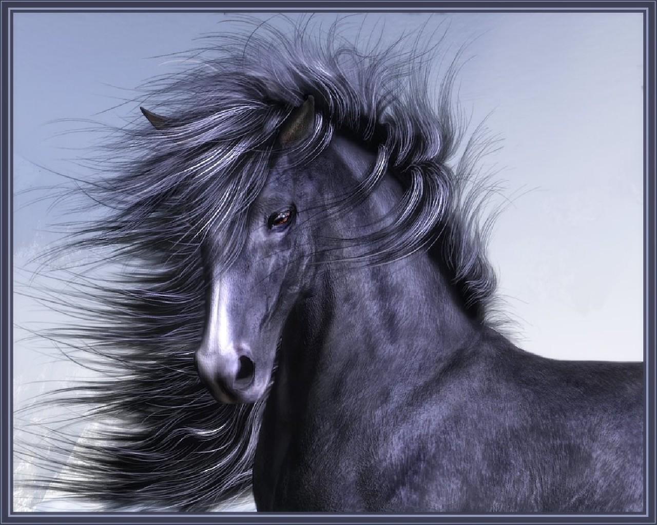 hintergrundbilder pferde tiere farbigen hintergrund. Black Bedroom Furniture Sets. Home Design Ideas
