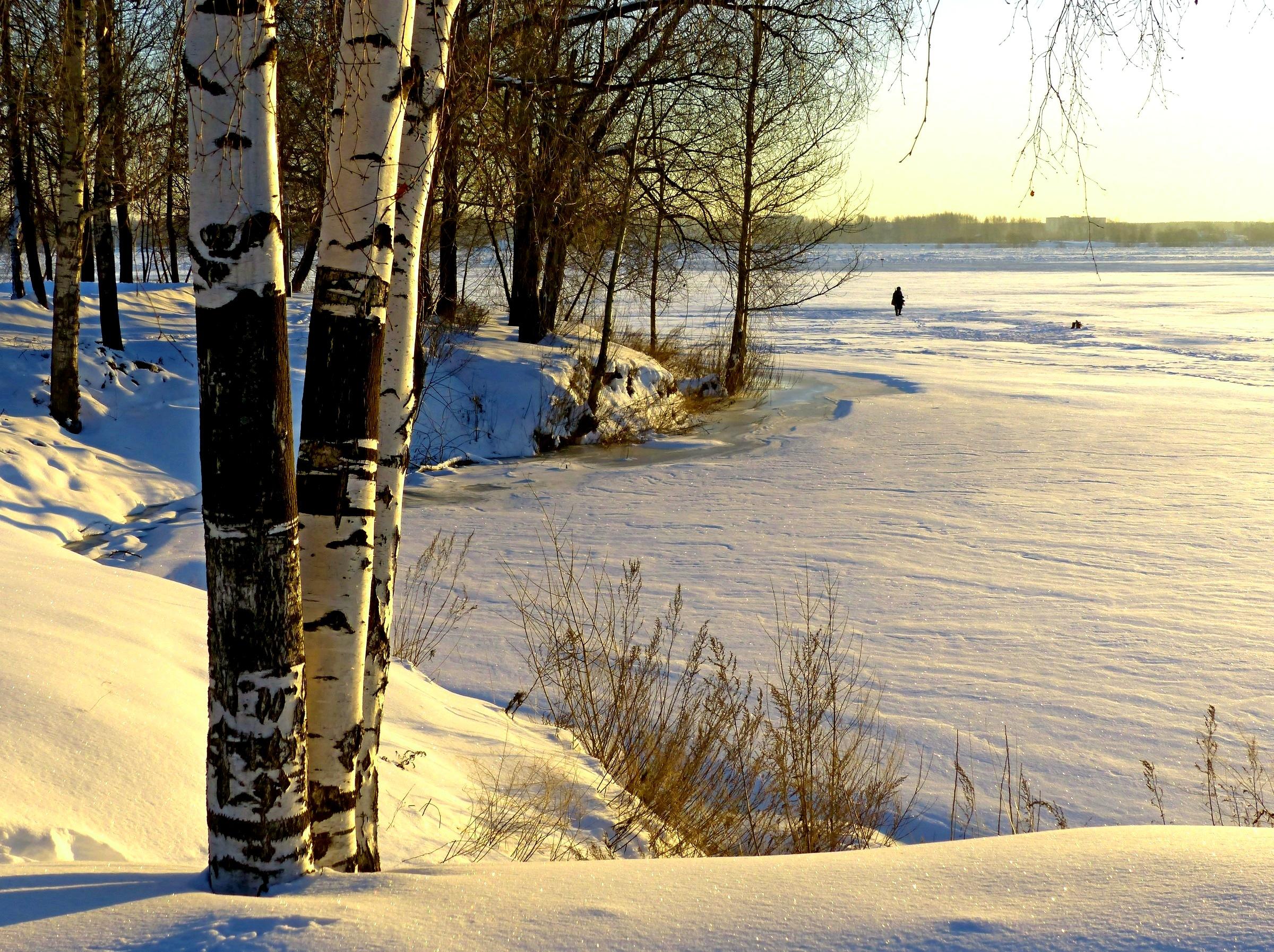 Fonds d 39 ecran saison hiver arbres le tronc bouleau nature - Tronc bouleau ...