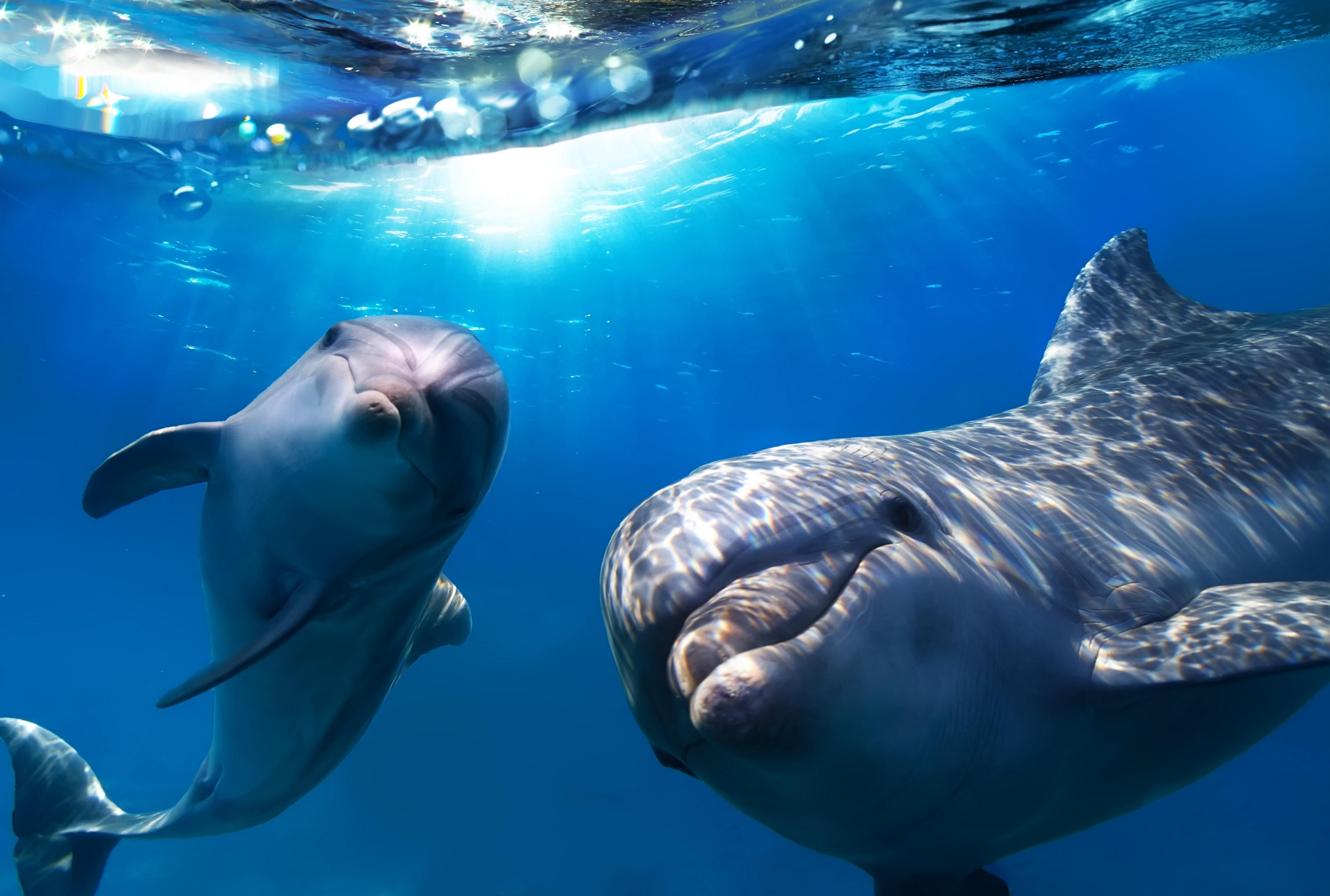 дельфины в море картинки на рабочий стол