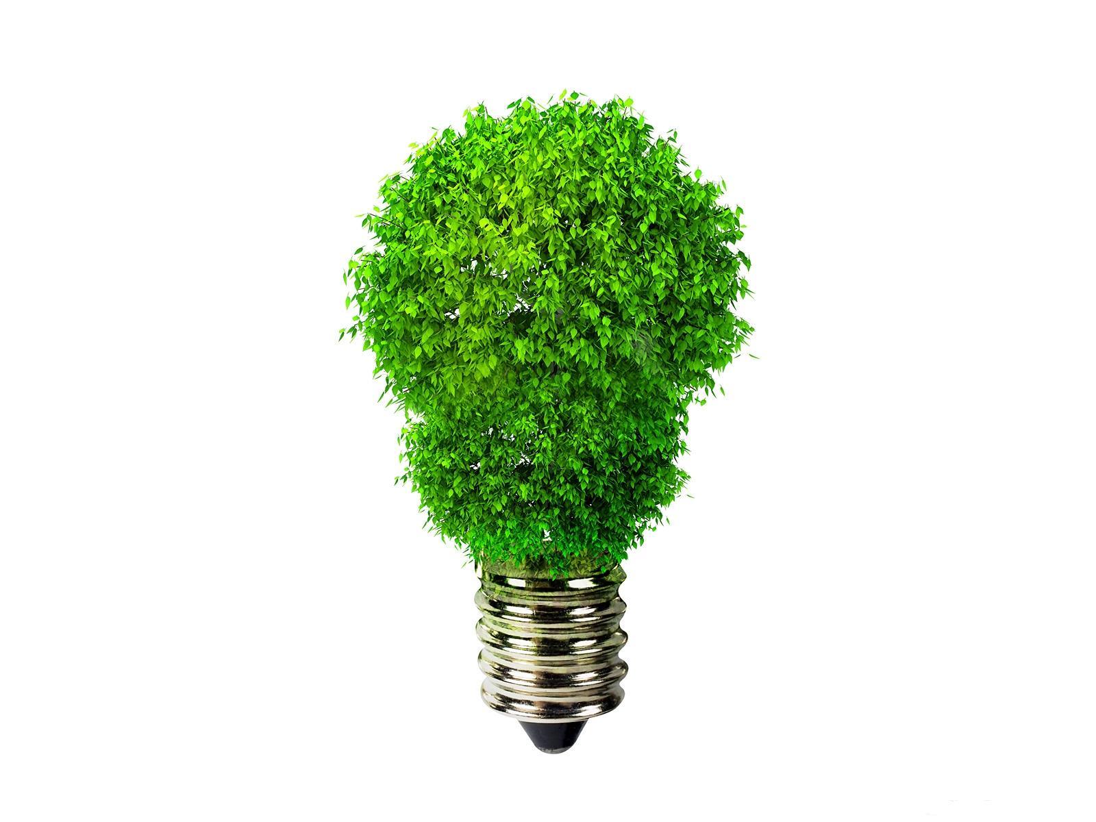 Images Light bulb Creative Plants