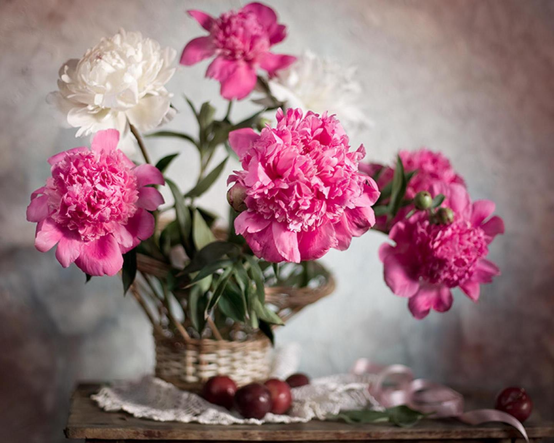 Fonds d'ecran Pivoine Fleurs télécharger photo