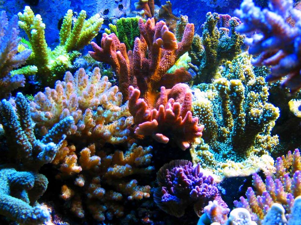 Picture Underwater world Corals Animals