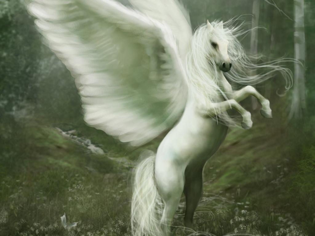 Images Pegasus Fantasy Magical Animals