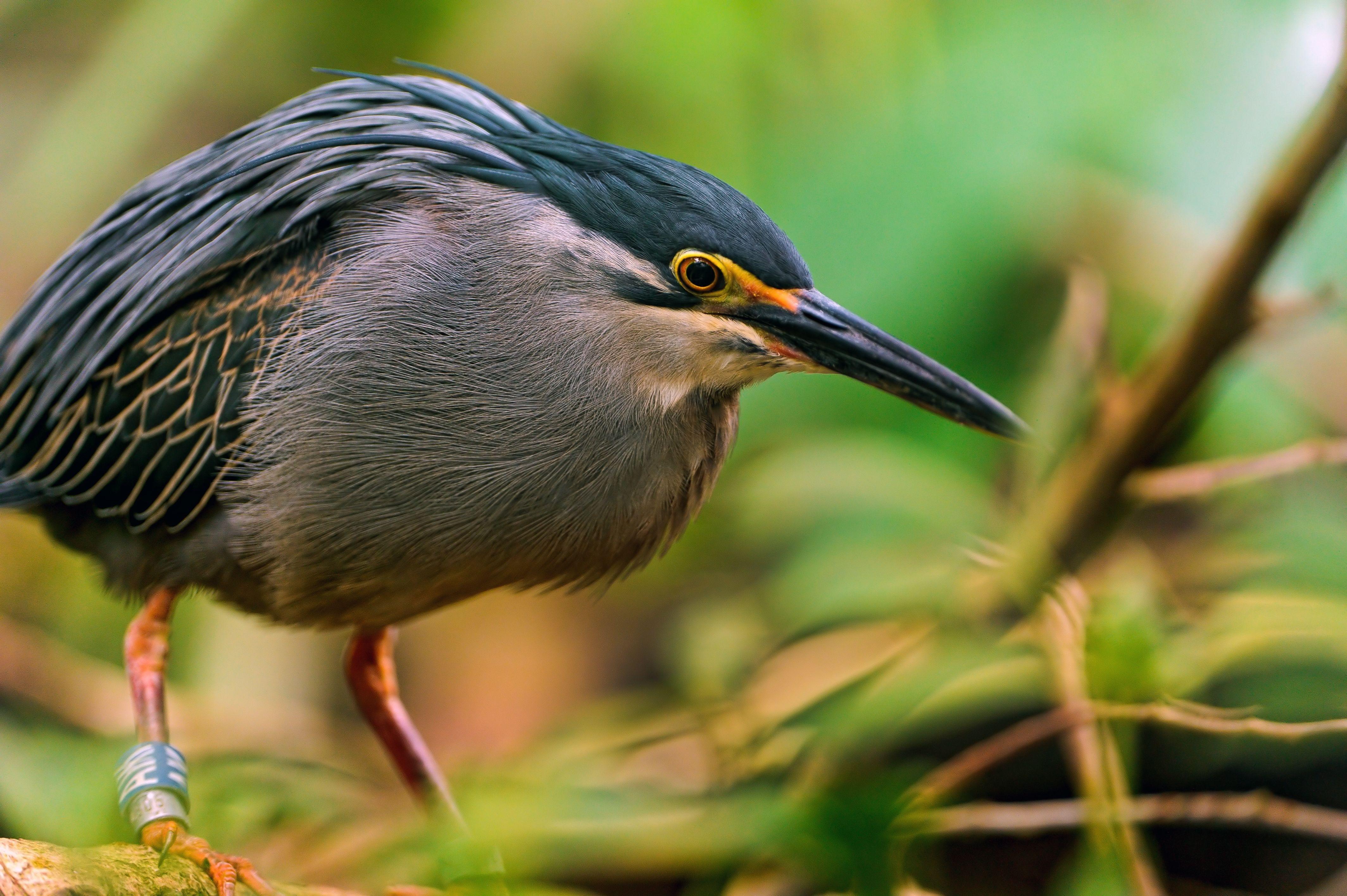 фото выпь птица