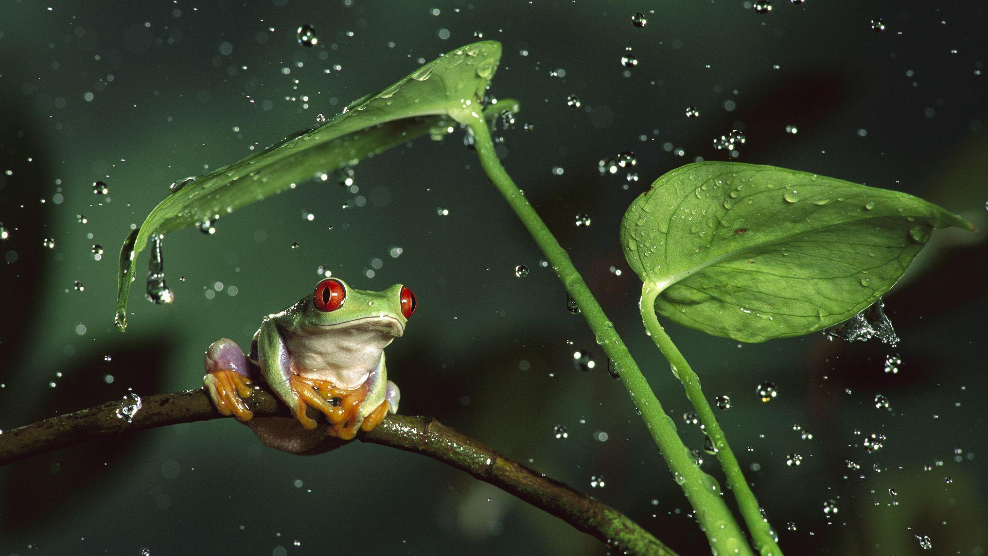 壁紙 カエル 水滴 動物 ダウンロード 写真