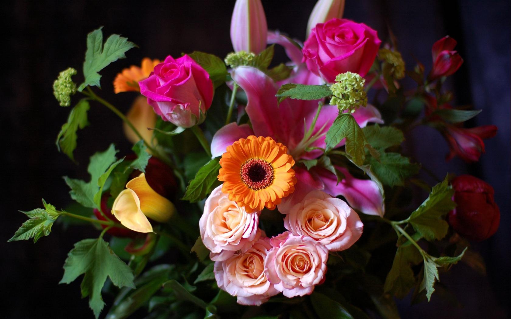 Фото красивые цветы высокое качество большие