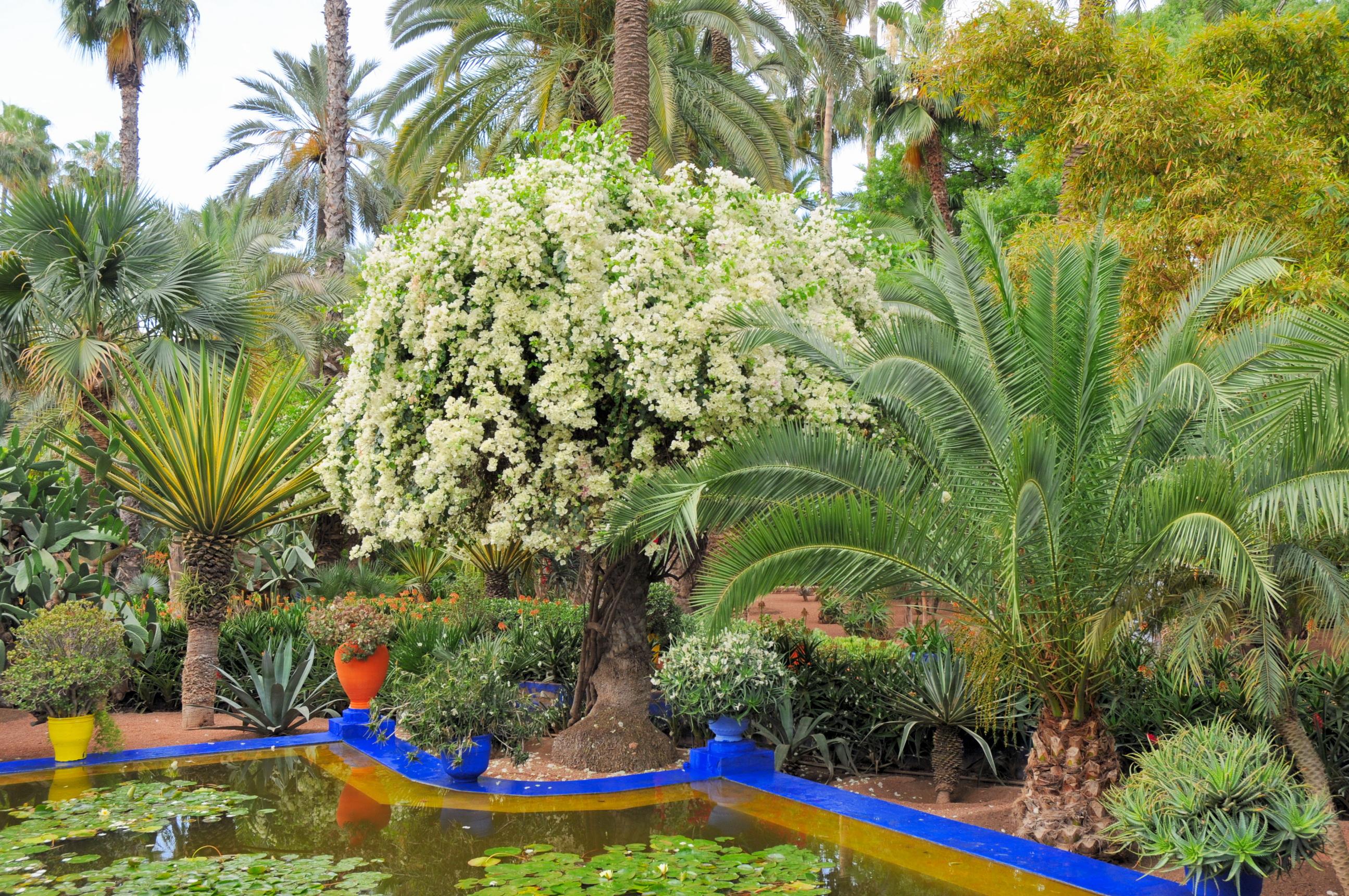 Fondos de pantalla jard ns morocco marrakech jardin for Jardin marrakech