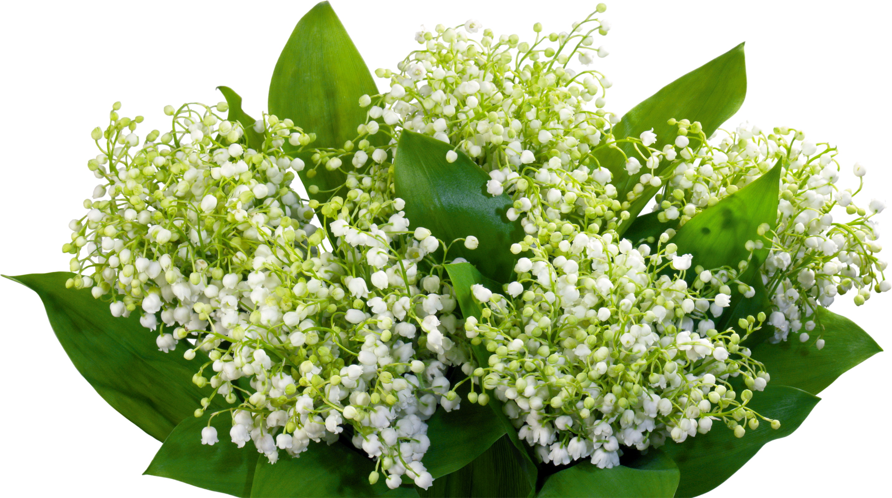 fonds d 39 ecran 2864x1600 muguet de mai fleurs t l charger photo. Black Bedroom Furniture Sets. Home Design Ideas