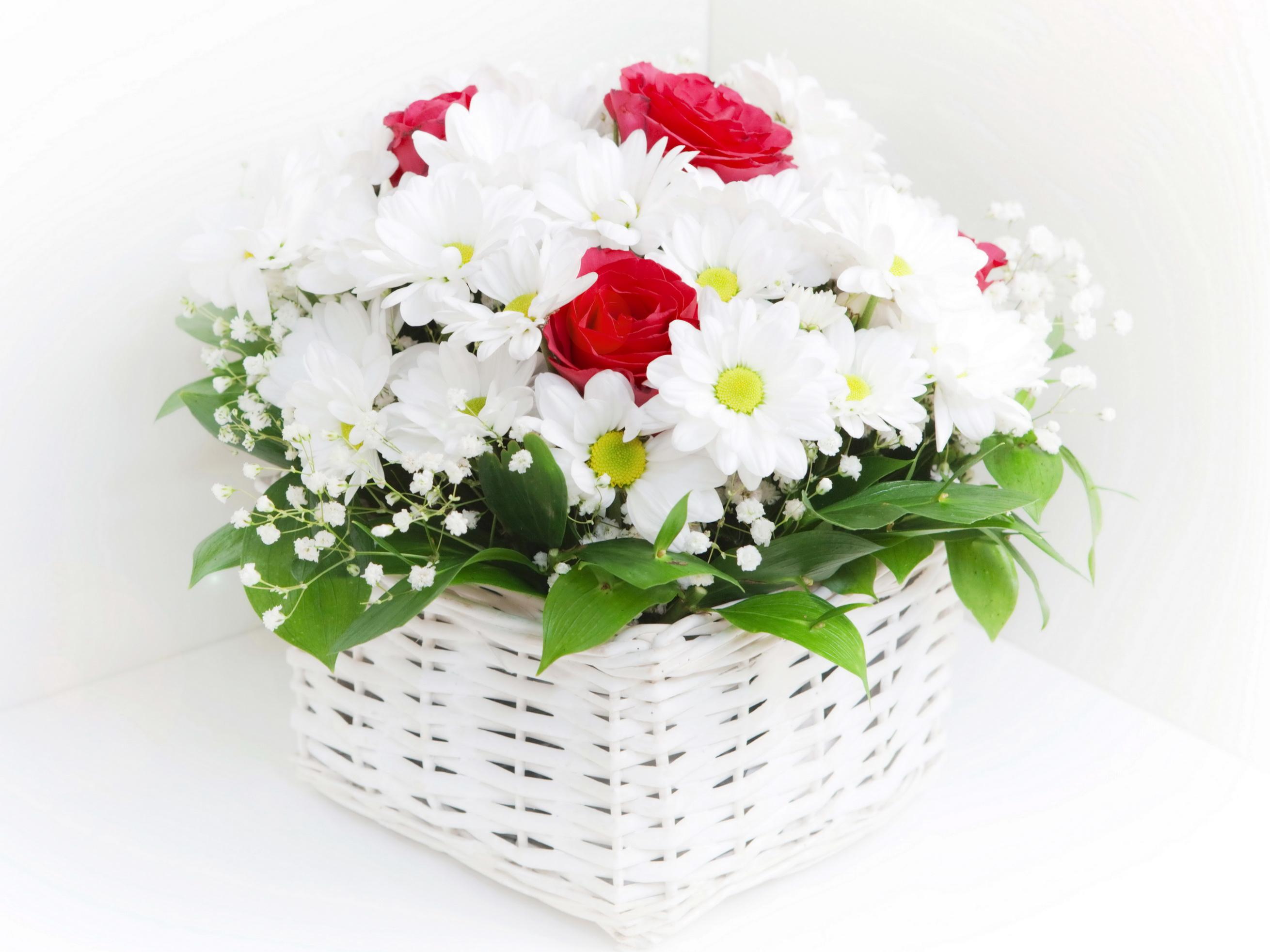 Цветы ромашки букет фото