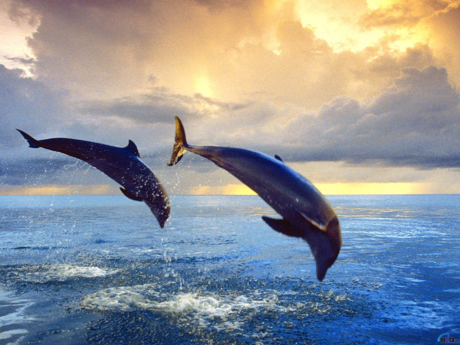 an introduction to the nature of the dolphin
