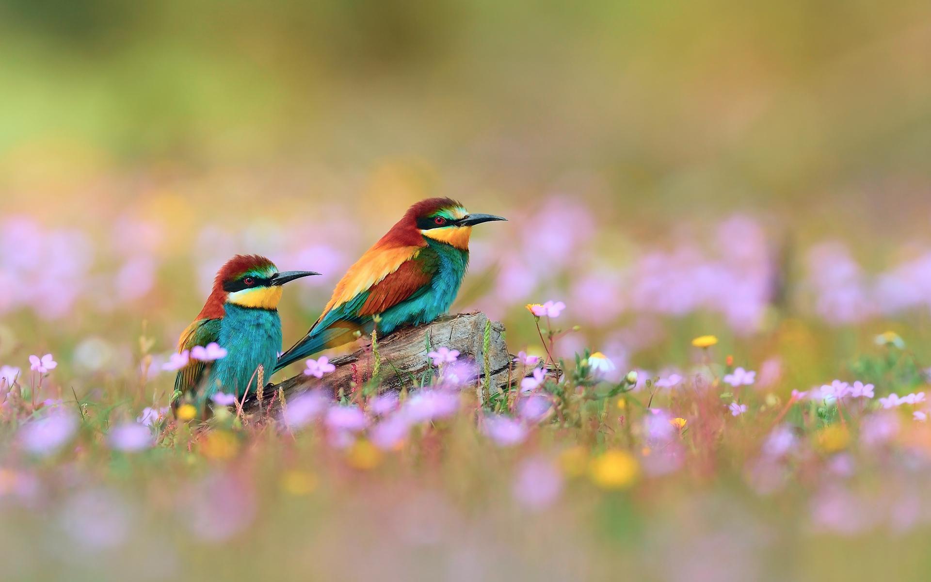 Fonds d 39 ecran oiseau exotique animaux t l charger photo for Photo oiseau