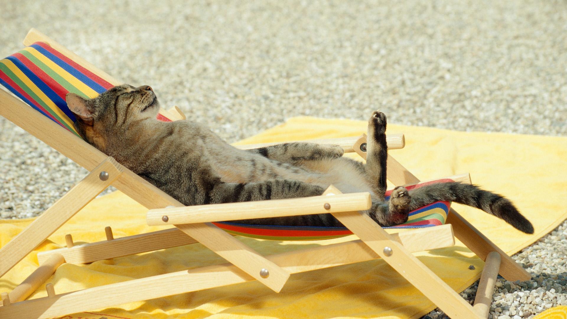Photos Cats Sunlounger animal
