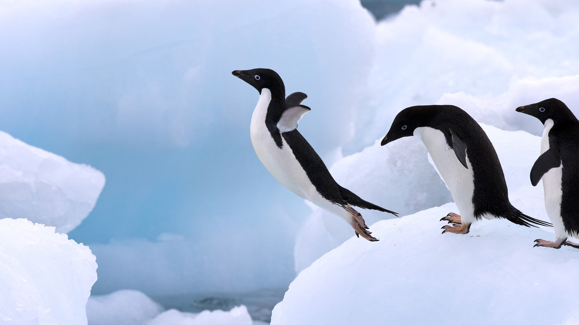 飛び込むペンギン