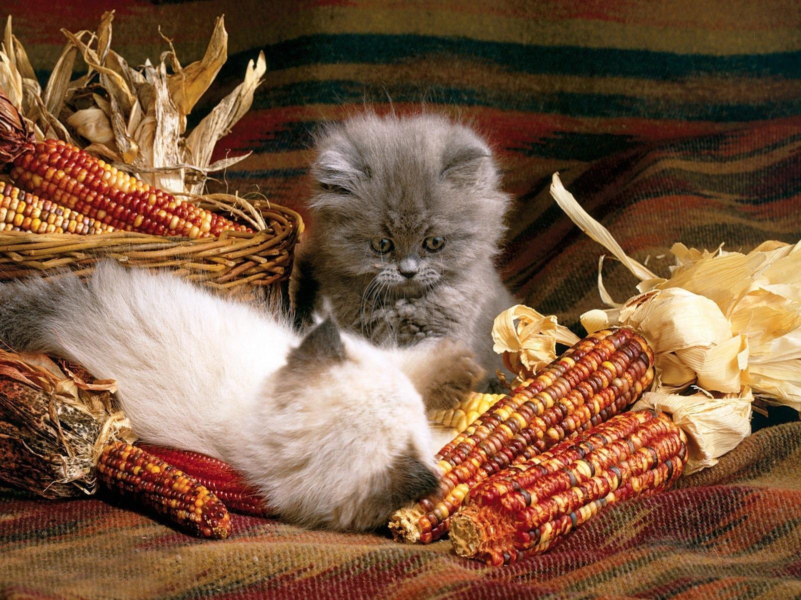 von Katze Tiere
