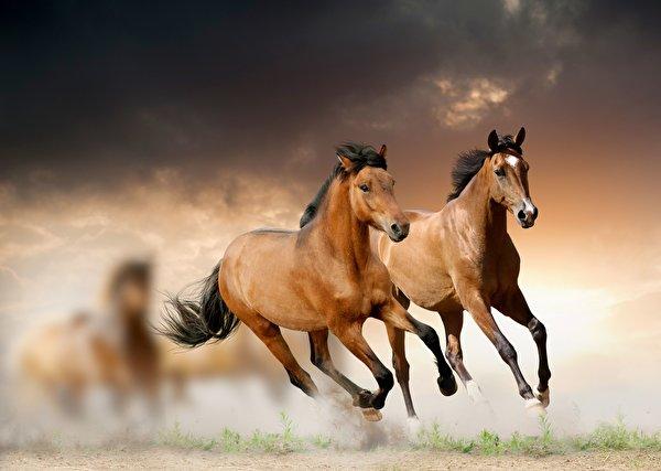 Photo horse Run Animals 600x427 Horses Running animal