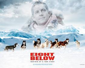 Bakgrundsbilder på skrivbordet Paul Walker Eight Below Filmer