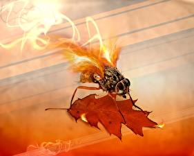 Bilder Kreativ Fliegen Feuer